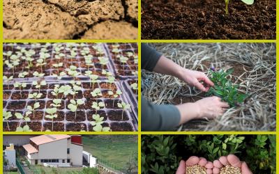 """Proyecto """"Taller Terapéutico de Horticultura"""", con el apoyo de Fundación Disa, OFGC y Cabildo de G.C."""